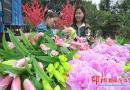 城步万红花卉合作社残疾农家女杨淑婷带领乡亲插花致富